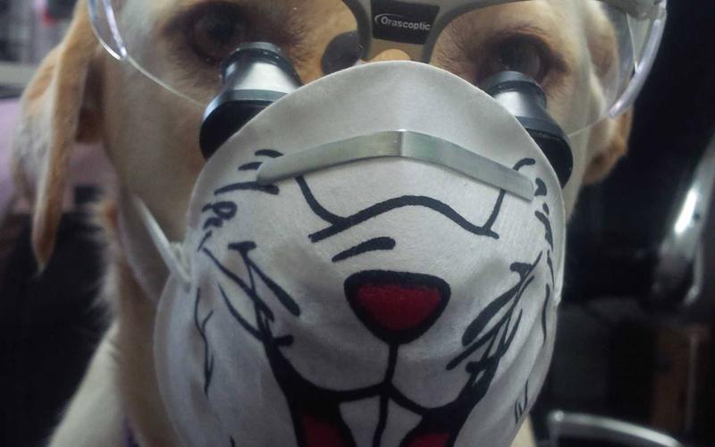 Clay Center Family Dental Care dog helper
