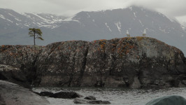 Body of water with two seagull and a tree on snow capped mountains in the background